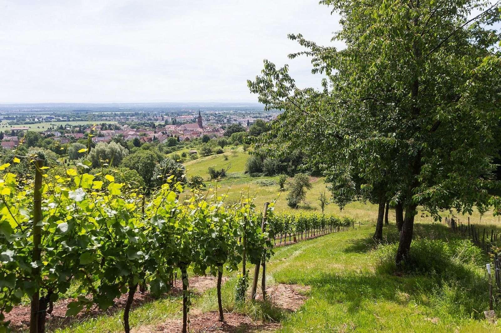 Envie de découvrir nos vignobles ?
