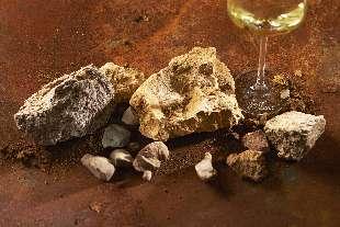 Exposition : le vignoble alsacien, fruit de la tectonique